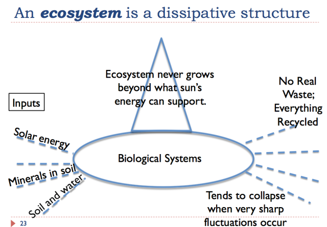 23 an ecosystem is a dissipative structure
